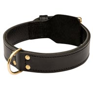 Training 2 Ply Leather Amstaff Collar