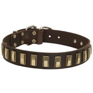 Leather Amstaff Collar with Awesome Brass Plates