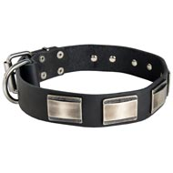 Leather Amstaff Collar Massive Nickel Plates