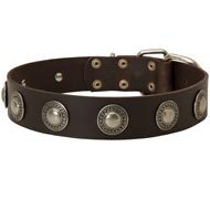 Leather Amstaff Collar Decorated with Silver Conchos