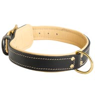 Padded Leather Amstaff Collar