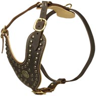 Royal Design Leather Amstaff Harness with Brass Studs