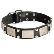 Leather Amstaff Collar Decorated with Nickel Cones and Plates