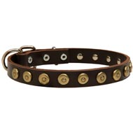 Leather Amstaff Collar with Brass Dotted Circles for Fashion Walking