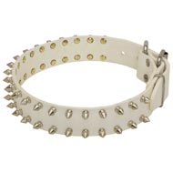 Spiked White Leather Amstaff Collar for Fashion Walking