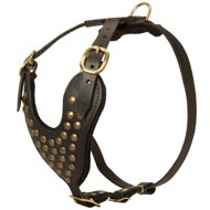 Adjustable Studded Leather Amstaff Harness for Fashion Walking