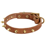 Walking Designer Leather Amstaff Collar with Brass Spikes