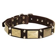 Leather Amstaff Collar with Studs and Plates