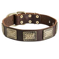Leather Amstaff Collar with Massive Brass Plates