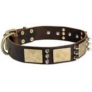 Designer War-Style Leather Amstaff Collar with Spikes and Plates