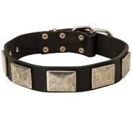 Leather Amstaff Collar with Large Nickel Plates