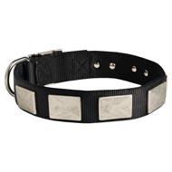 Nylon Amstaff Collar Massive Nickel Plates