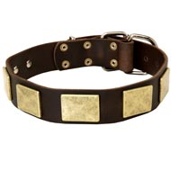 Handcrafted Leather Amstaff Collar With Vintage Massive Plates
