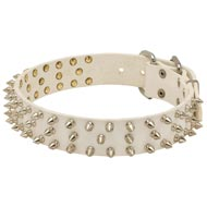 Designer Spiked Leather Amstaff Collar for Fashionable Walking