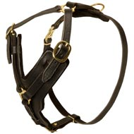 Padded Leather Amstaff Harness for Agitation Training