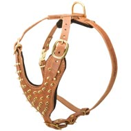 Brass Spiked Leather Amstaff Harness for Fashion Walking