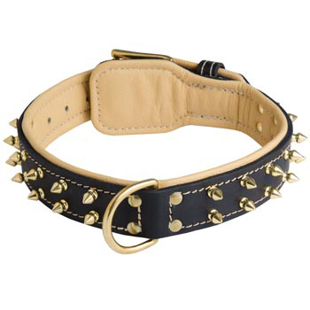Leather Amstaff Collar Spiked Padded with Nappa Leather Adjustable
