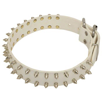 Spiked White Leather Collar for Amstaff Walking
