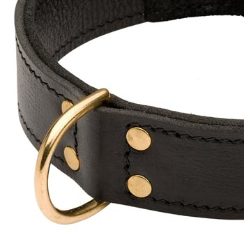 Brass D-ring Stitched to Leather Amstaff Collar