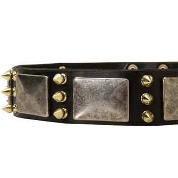 Stylish Leather Dog Collar for Amstaff