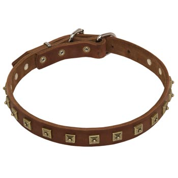 Amstaff Leather Collar For Walking And