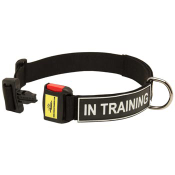 Nylon Dog Collar for Amstaff Police Training