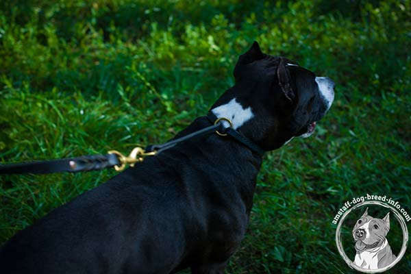 Amstaff choke leather collar with brass hardware