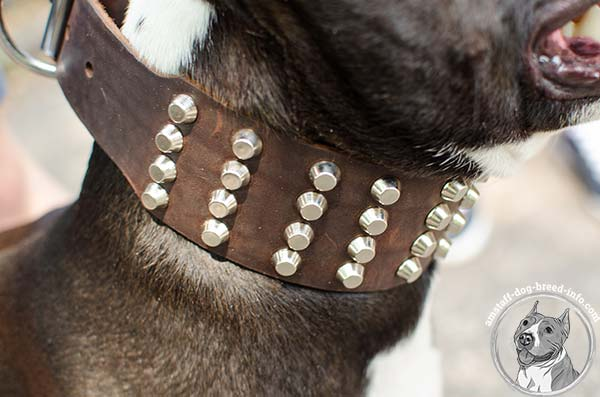 Amstaff leather collar adorned with 4 rows of pyramids