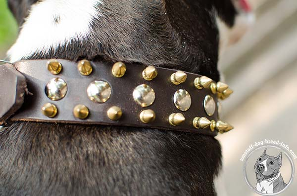 Amstaff leather collar with 2 rows of spikes and 1 row of nickel studs