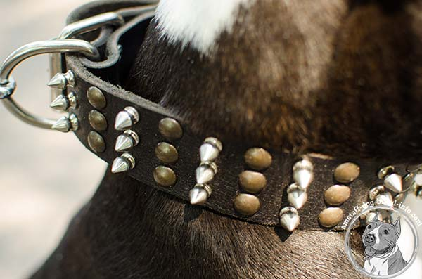 Amstaff leather collar with rivets