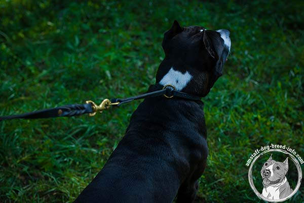 Amstaff leather collar of high quality with brass plated hardware for improved control