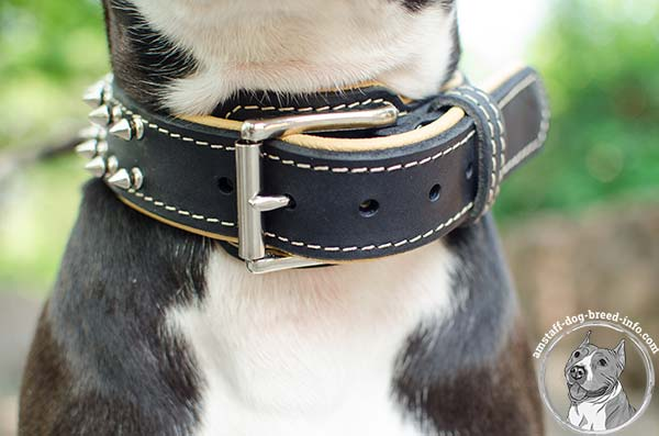 Amstaff leather collar with easy to fasten buckle