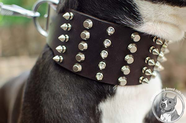 Amstaff leather collar with exclusive decorations
