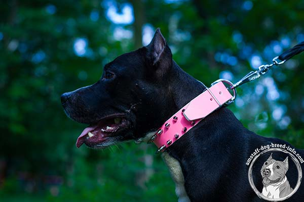 Amstaff pink leather collar with rust-proof nickel plated fittings for professional use