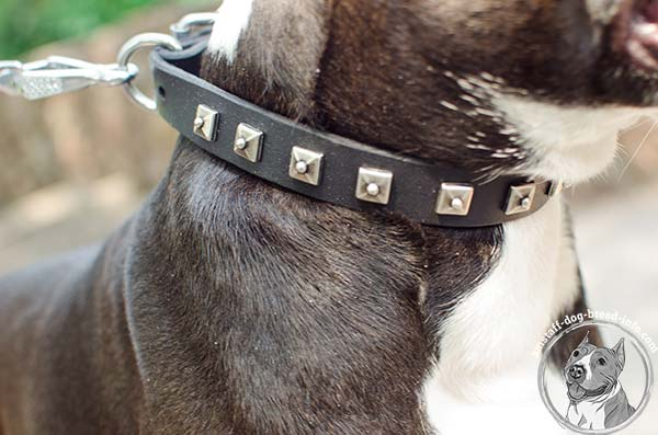 Reliably riveted Amstaff leather collar