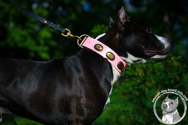 Amstaff pink leather collar with rust-resistant hardware for quality control
