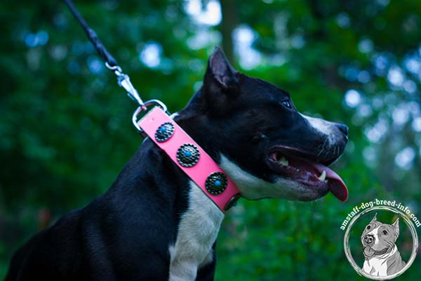 Amstaff pink leather collar easy-to-adjust with handset decoration for any activity