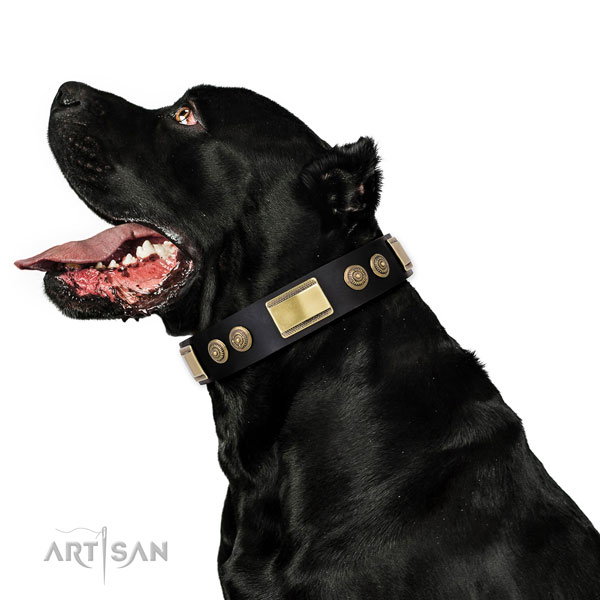 Impressive adornments on comfortable wearing dog collar