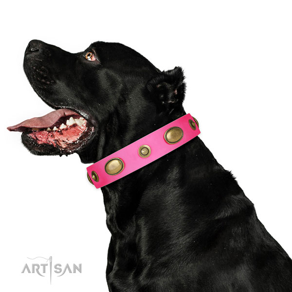 Stylish walking dog collar of natural leather with unusual embellishments