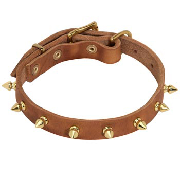 Designer Leather Collar for Amstaff