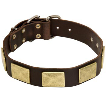 Leather Amstaff Collar with Fashionable Studs