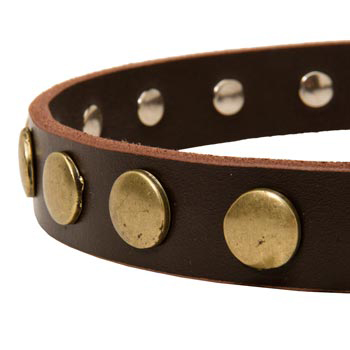 Designer Leather Dog Collar for Walking Amstaff