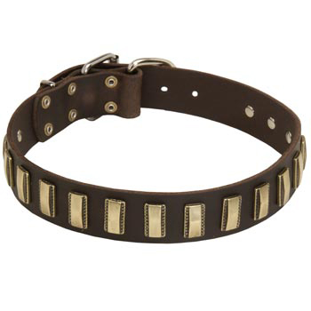 Leather Amstaff Collar Designer for Walking in Style