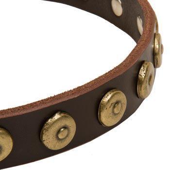 Amstaff Collar with Stylish Circles