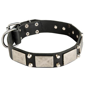 Studded Leather Amstaff Collar
