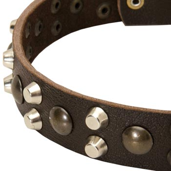 Leather Amstaff Collar with Hand Set Studs