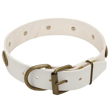 White Leather Dog Collar for Amstaff Stylish Walks