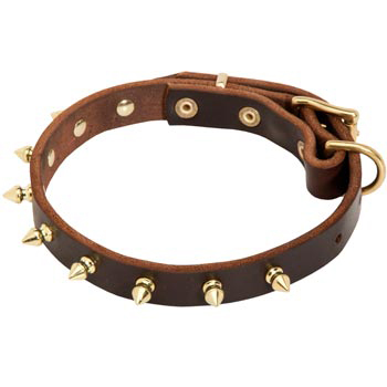 Leather Amstaff Collar with Brass Spikes