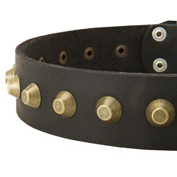 Leather Dog Collar with Brass Pyramids for Amstaff