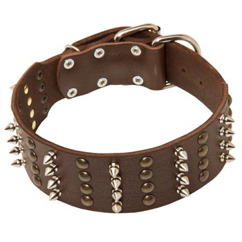 Leather Collar for Amstaff Walking in Style